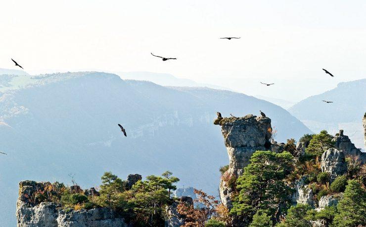 Gorges du Tarn, Zuid Frankrijk