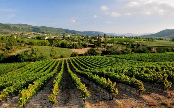 Wijngaarden in directe omgeving van Les Arches