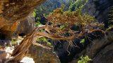 Ruige natuur vlakbij Domaine de Pradines