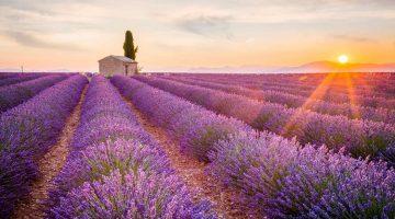 Lavendelvelden plateau de Valensole, Provence, Zuid Frankrijk
