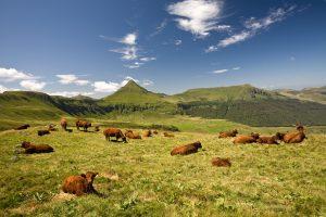 Monts du Canal, Auvergne, Prachtige natuur, Camping Moulin de Chaules,