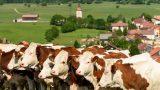 Veel voorkomend tafereel in de Jura