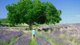 Lavendel wandelroute bij Sault, Drome